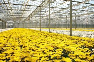 Tuinbouw & Agribusiness